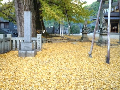 金色の落ち葉を踏んで寄る大樹.jpg
